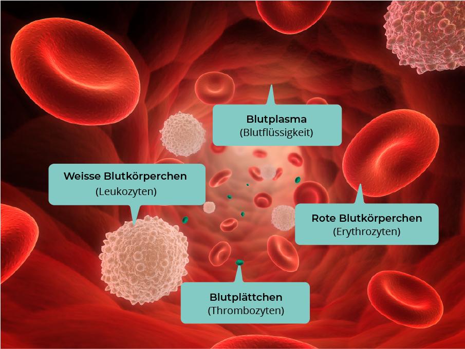 Grafik über das menschliche Blut
